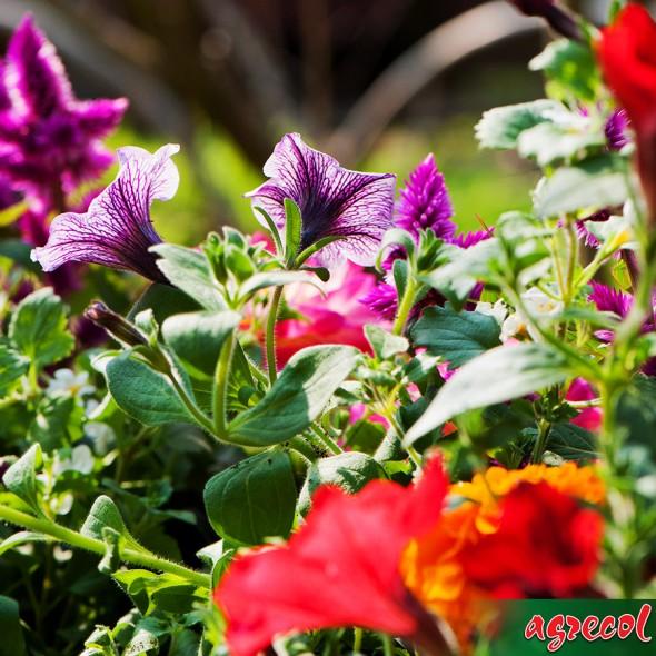 nawóz do roślin balkonowych