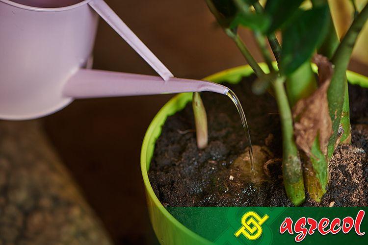 podlaewanie roślin