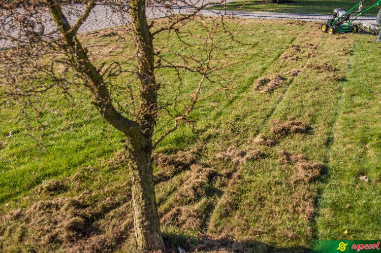 wertykylacja trawnika
