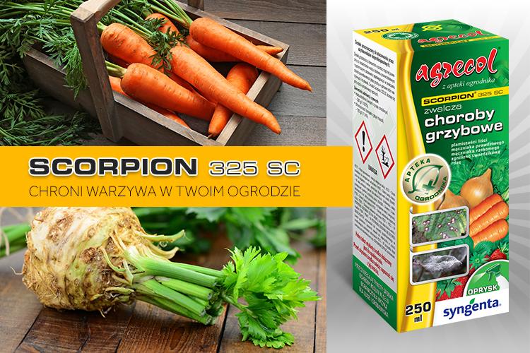Newsletter Scorpion 2A 750x500