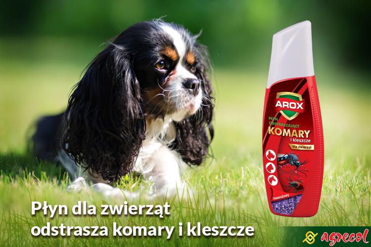 AROX dla psów