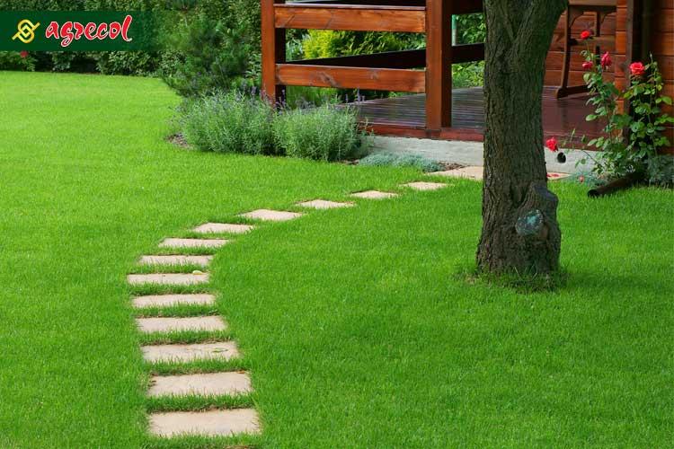 chodnik-w-trawie