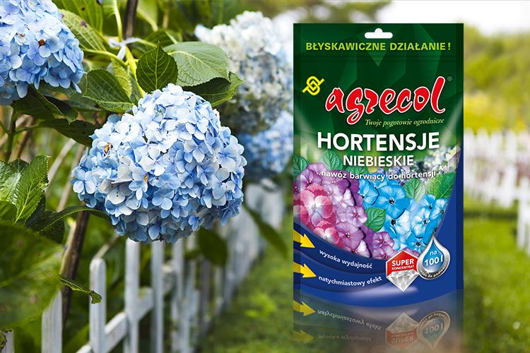 hortensja niebieska nawoz